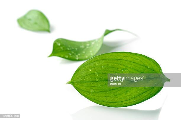 Water Drop on Leaves