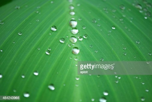 water drop on the fresh leaf : Stock Photo