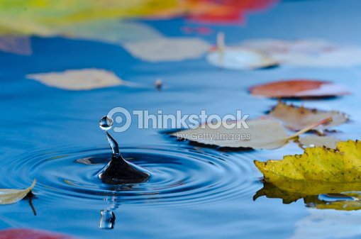 Water droplet in pond with autumn leaves : Stock Photo