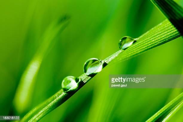 Wasser Tropfen auf Gras
