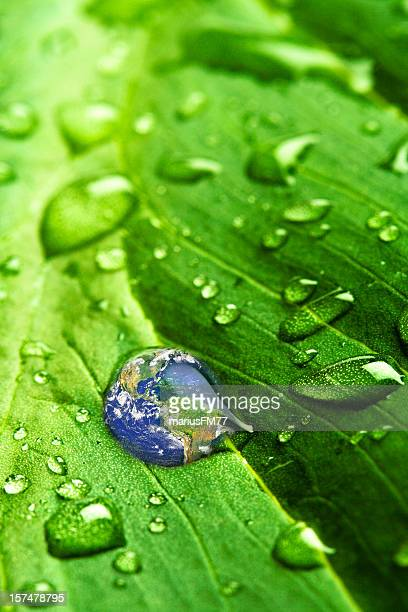 Water droplets, one being earth, on green leaf