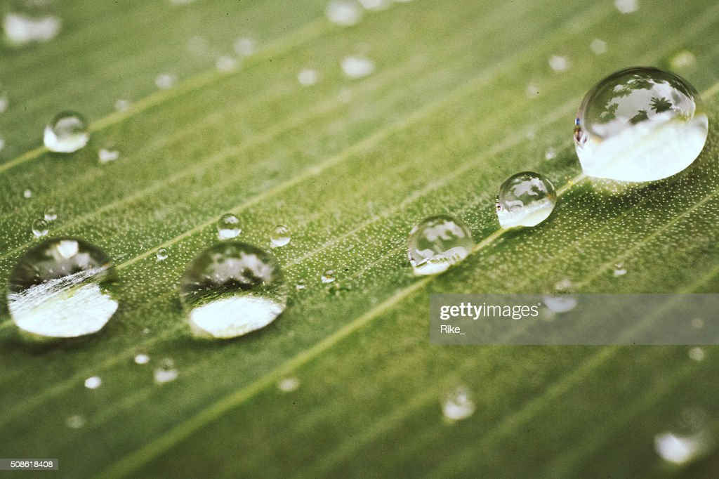 Water drops after rain : Stock Photo