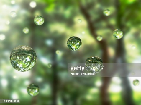 Water drops in the forest