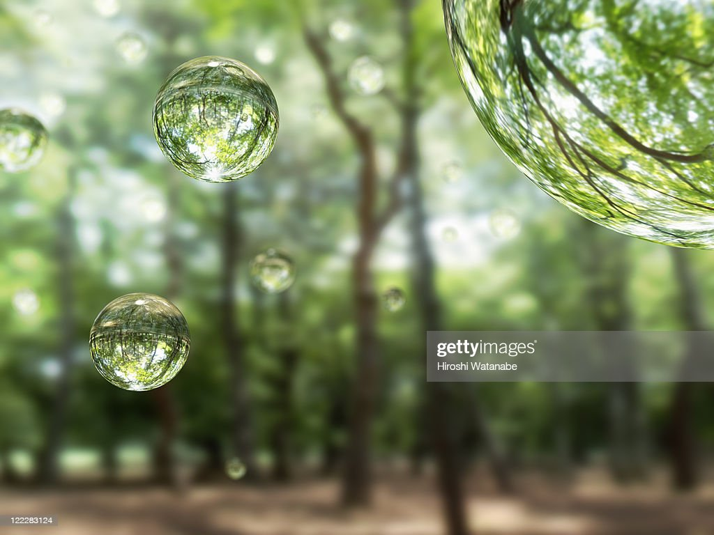 Water drops in the forest : Stock Photo