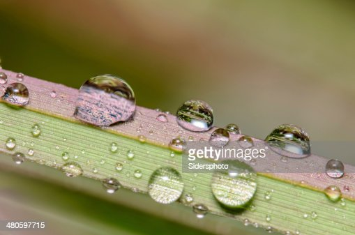 Water Drops on a multicolored blade of grass : Stock Photo