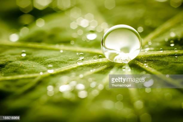 雨滴緑の葉