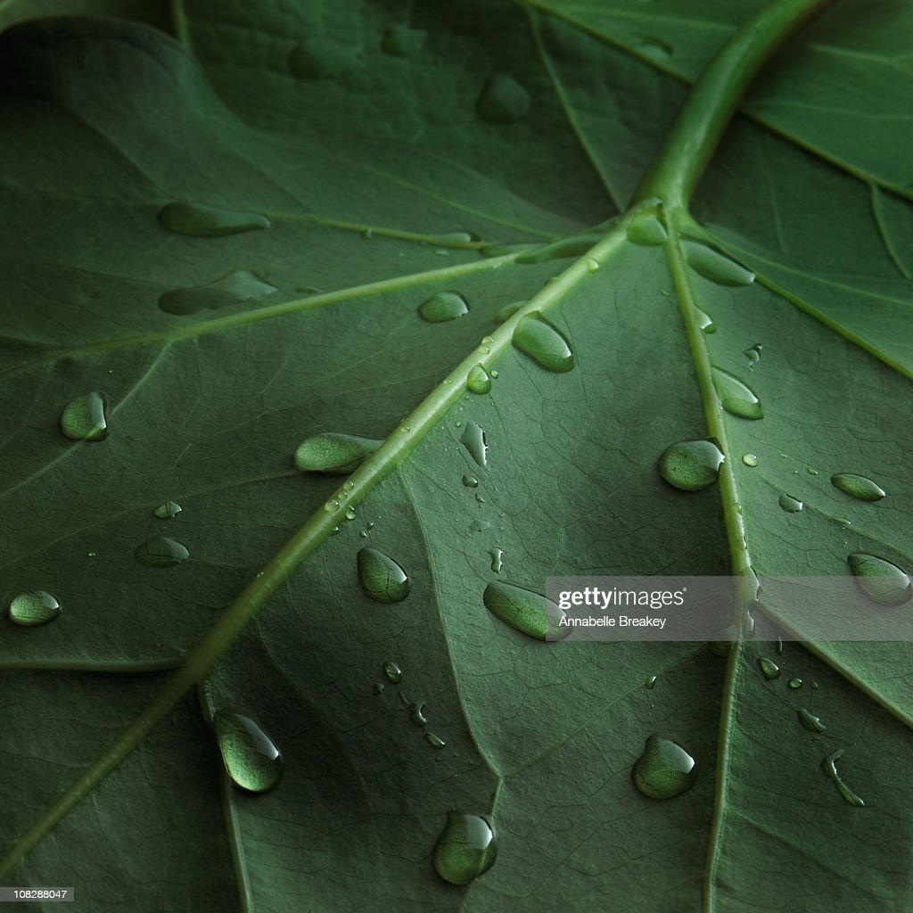 Water drops on leaf : Stock Photo