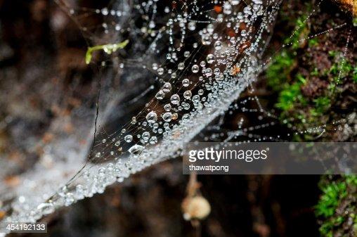 Gocce d'acqua su spider web : Foto stock