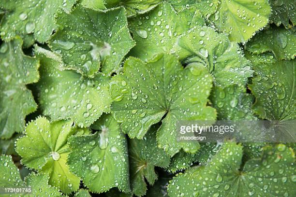 Wassertropfen auf den Blättern