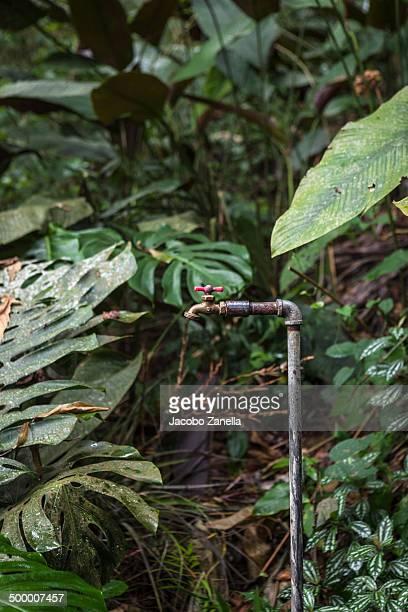 Water faucet in the jungle