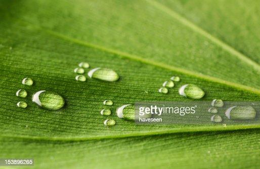 Water footprints on leaf : Stock Photo