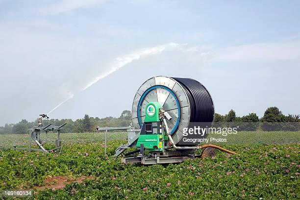 Water irrigation spraying watering potato field Sutton Suffolk England