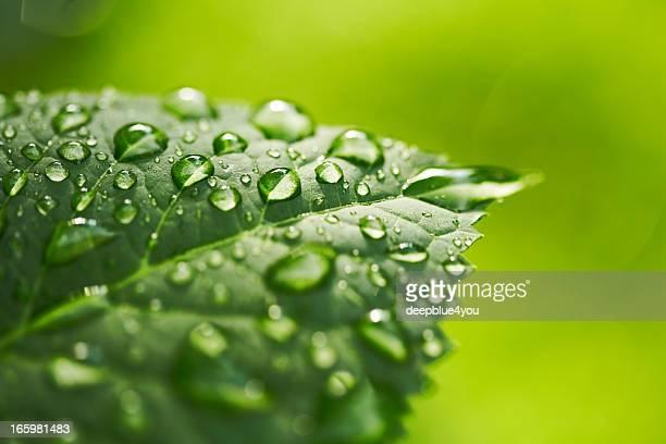 Hoja con gota de agua sobre fondo verde