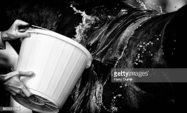 Water is thrown on a horse after the during the App At 188Bet Novices' Hurdle Div 2 at Exeter Racecourse on October 12 2017 in Exeter England