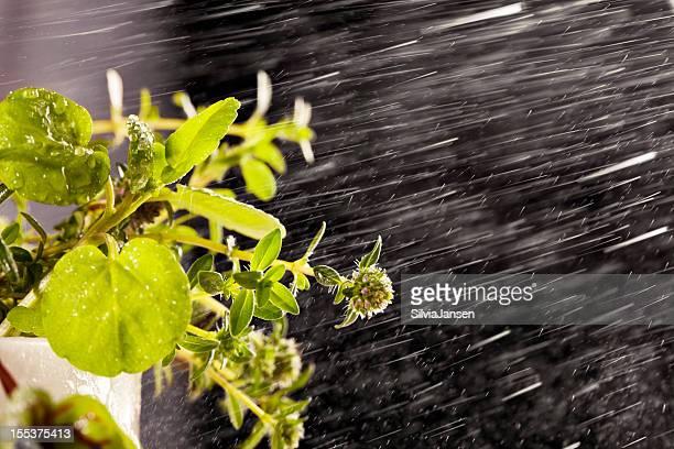 water mixed herbs freshness