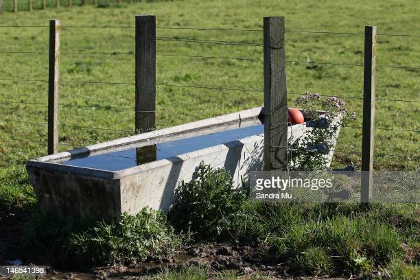 A water trough is seen in the fields of a rural dairy farm on April 18 2012 in Morrinsville New Zealand Raw milk sales are growing as more people are...