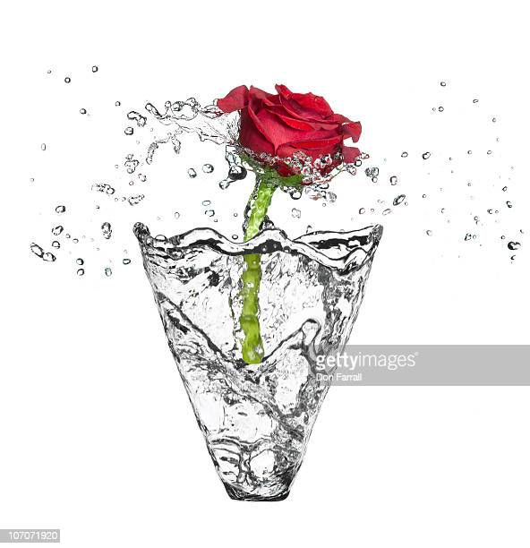 Water vase with a single rose