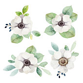 Set boutonnieres with anemones and eucalyptus leaves isolated on white background. Watercolor illustration