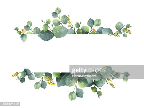 Watercolor green floral banner with silver dollar eucalyptus leaves and branches isolated on white background. : Stock Photo