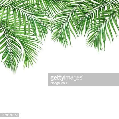 Aquarelle Peinture Cadre Noix De Coco Feuille De Palmier Des