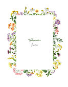 Watercolor rectangular frame with meadow plants. Healing Herbs for for summer or spring cards, Invitations, posters, banners or greeting design.