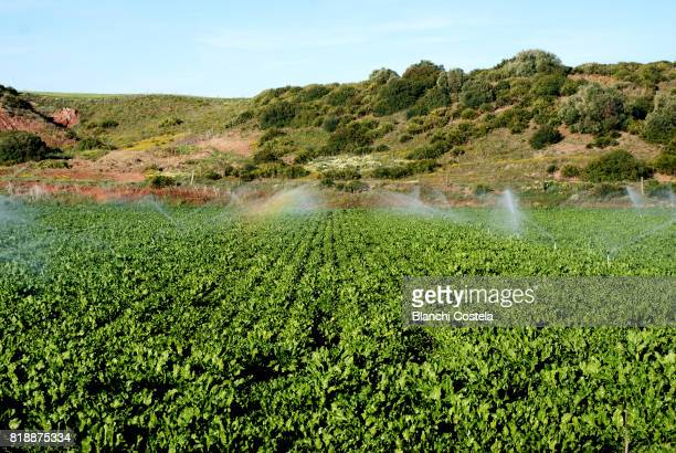 Watered fields in spring