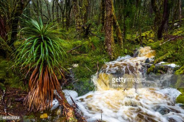 Waterfall at Overland track, Tasmania