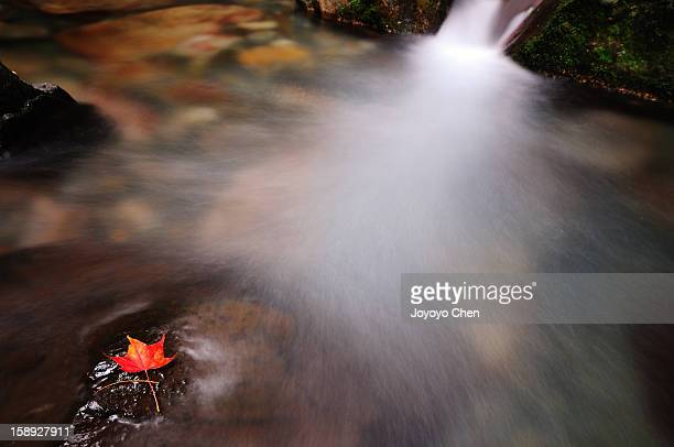 Waterfall flows over rocks with red maple leaf