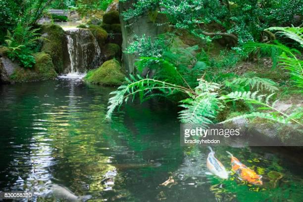 Chute d'eau s'écoule doucement dans étang koi jardin Zen japonais