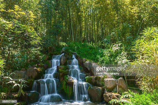 waterfall in a bamboo forest