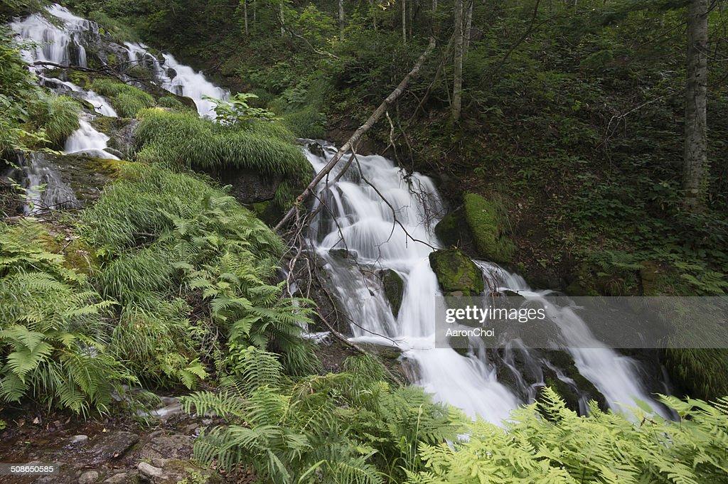 Waterfall in a creek : Stock Photo