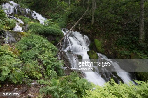 Waterfall in a creek : Stock Photo