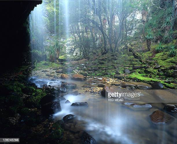 Waterfall in a rainforested gorge in the Cradle Mt National Park Tasmania Australia.