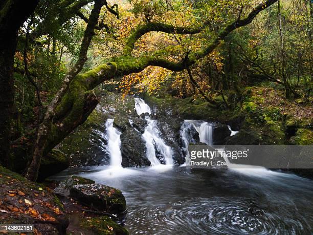 Waterfall in Glengarriff Nature Reserve, Ireland