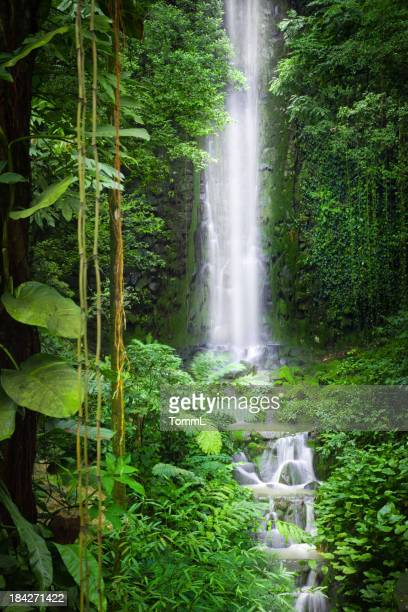 Queda de água na selva