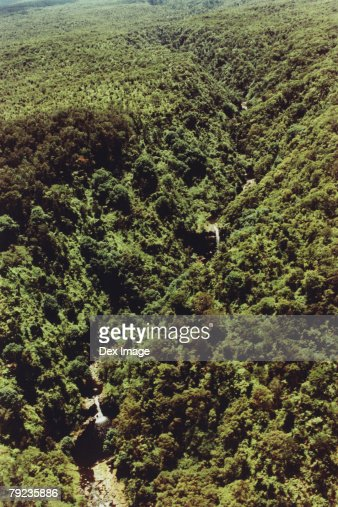 Waterfall in Rainforest, Maui, Hawaii : Stock Photo
