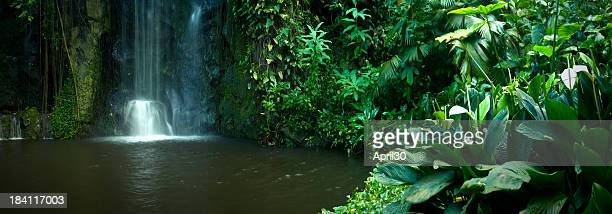 Cascade dans la forêt tropicale