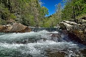 Up-close Rapids in a waterfall surrounded by towering Pine trees, rocks, and blue sky.