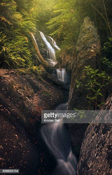 Waterfall, stream, rocks and lush vegetation in Victoria, Australia