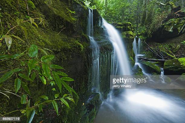 Waterfalls, Greenbrier, Great Smoky Mountains NP
