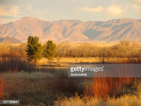 水鳥コンプレックス、ニューメキシコ