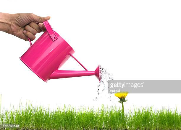 watering a weed