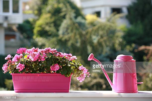 watering can and azalea flower