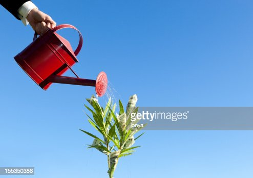 watering money growing on plant