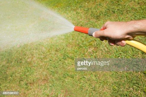 Watering the garden in the sun light. : Stock Photo
