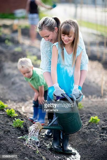 Abeberamento do jardim vegetais