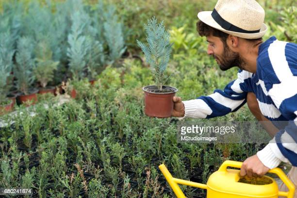 Watering the plants.