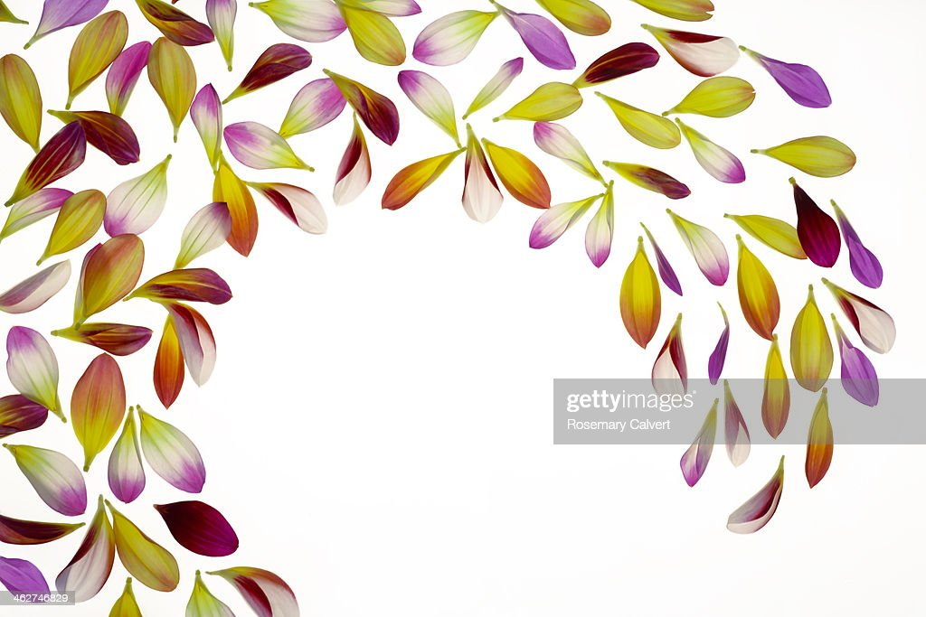 Wave of colourful petals on white