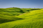 Rolling landscape near San Quirico d´Orcia, Tuscany, Italy