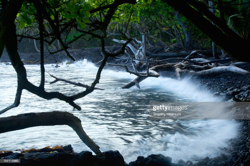 Waves lapping against lava rock in a small cove as seen through tree branches : Stock Photo